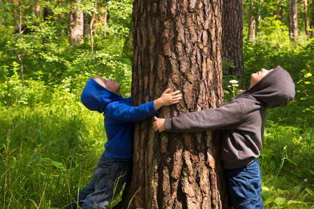 43132517 - children (boys, hands) hugging pine, playing and having fun outdoor in summer forest (park). environmental protection concept.